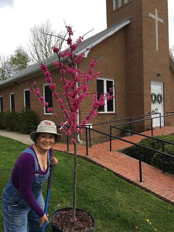 Shenandoah Green gardening